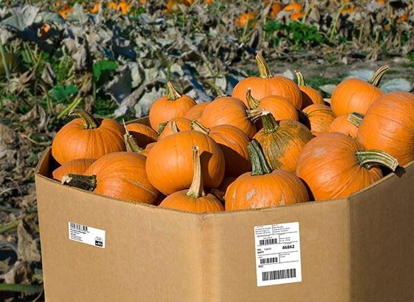Pumpkin cases with labels from MyProduce